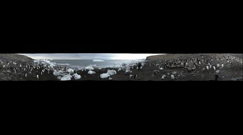 Adelie penguin colony of Cape Crozier from the beach - bis-