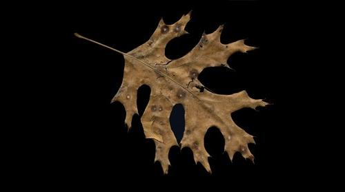 An intimate view of a fallen leaf