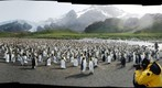 King Penguins in Gold Harbour, South Georgia