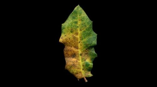 intimate landscape of a fallen leaf - 2