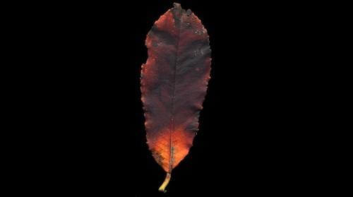 Intimate landscape of a fallen leaf - 3