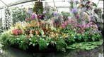 Kew puts it&#39;s tropical colours on display