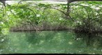  Mangroves at Lac Cai, Bonaire