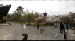 Ninnaji Temple 2/2