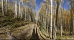 Aspen Grove, Maroon Bells Trail, Aspen, Colorado 360 degree panorama