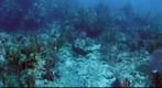 Underwater panorama coral reef scene, Cockroach Dog, British Virgin Islands