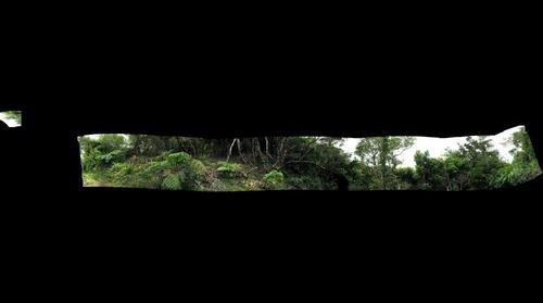Manoa Cliff Trail #2