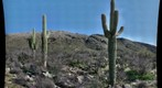 20100319 Saguaro Creek