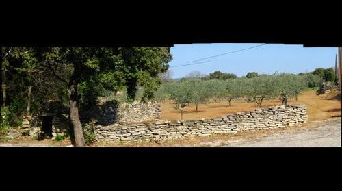 Puit et champ d'oliviers