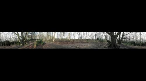 Roundway Hill Woods