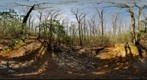 Hartshorne Woods (360 x 180) Spring