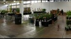 Lyon Arboretum Spring Plant Sale 1 - before the rush