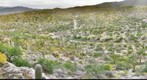Saguaro National Park - East