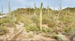 Saguaro National Park - West - 119