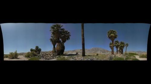 17 Palms Oasis Anza Borrego State Park Ca