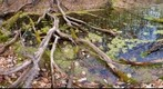 Vermont Vernal Pool