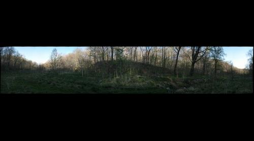 Frick Park Wetlands