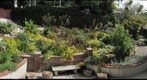 Southern California Drought-Tolerant Garden