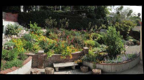 Southern California Drought-Tolerant Garden