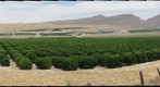Citrus Grove, Southeast San Joaquin Valley