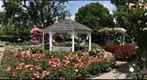 Rose Garden, Southampton, Hamptons, New, York