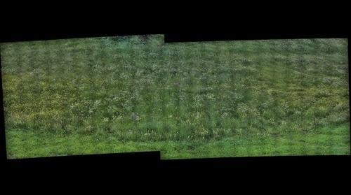 Une prairie a crest-voland (Savoie - France )