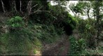Manoa Cliff Trail #3