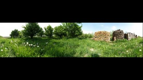 Trees and Firewood (360°)