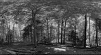 Forest #12 Variation 6