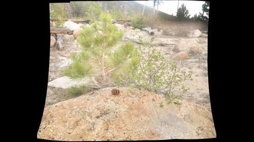 Rocky Plantlife