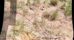 Colorado Ant hill - find the ants....