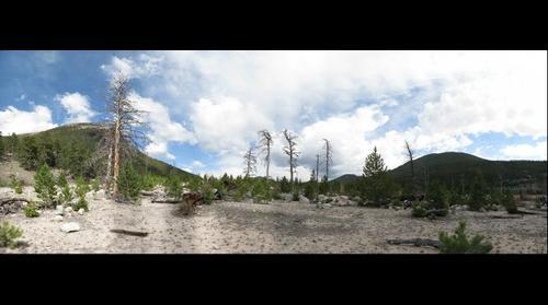Treescape - Rocky Mountain National Park