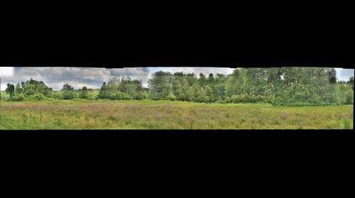 Umass Trees by Soccer Field's behind Warren McGuirk Football Field
