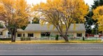Autumn Colors of Ginkgo, Day Care - San Jose, California