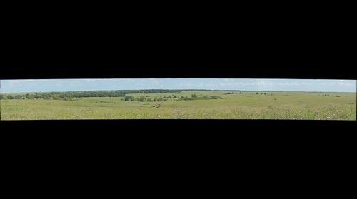Tallgrass 1