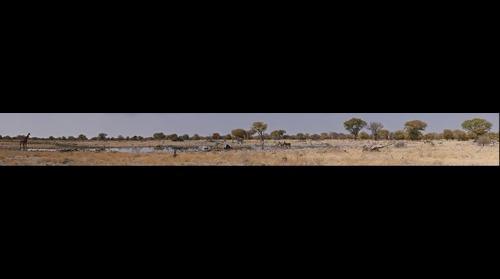 Etosha Namibia Waterhole