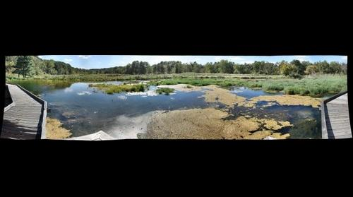 Terminal Wetland in Passive Wetland Treatment System