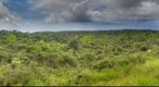 Mt Ka`ala Bog, Oahu