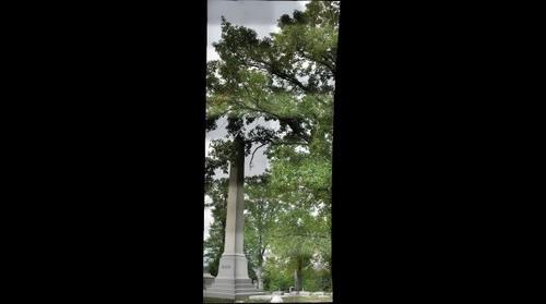 bur oak (quercus marcrocarpa), Allegheny Cemetery