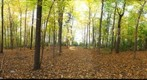 Dairy Bush GigaPan - 59 - Oct 13 2010