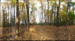 Dairy Bush GigaPan - 60 - Oct 20 2010