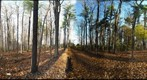 Dairy Bush GigaPan - 61 - Oct 27 2010