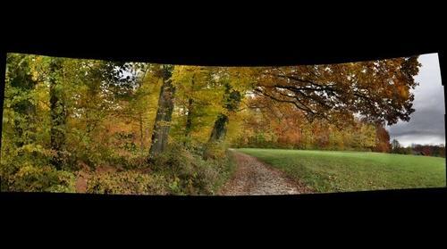 Herbstwald in Hedingen