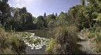 Christchurch Botanic Gardens 2