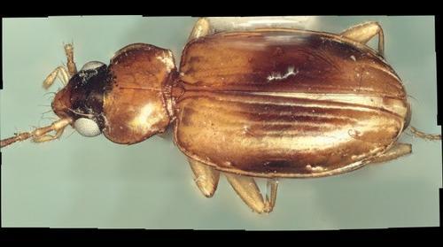 bug022