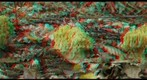 Ramaria sp (R/C - anaglyph)