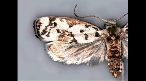 moth test 01