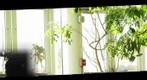 Phipps Panorama