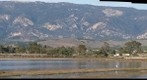101113 Devereux Slough north end birds with Santa Ynez Mountains, Goleta, California