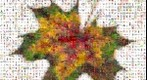 Photomosaic of an maple leaf with autumn colors